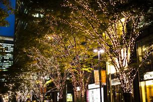 街路樹のクリスマスイルミネーションの写真素材 [FYI04893214]