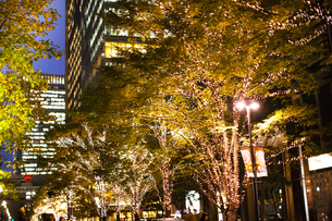 街路樹のクリスマスイルミネーションの写真素材 [FYI04893218]