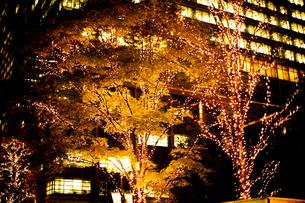 街路樹のクリスマスイルミネーションの写真素材 [FYI04893226]