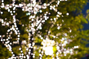 街路樹のクリスマスイルミネーションの写真素材 [FYI04893230]