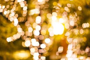 街路樹のクリスマスイルミネーションの写真素材 [FYI04893233]