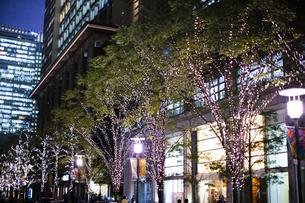街路樹のクリスマスイルミネーションの写真素材 [FYI04893236]