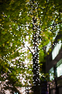 街路樹のクリスマスイルミネーションの写真素材 [FYI04893381]