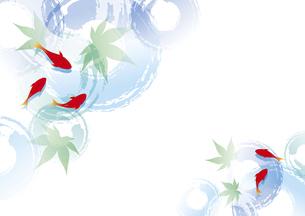 金魚と青紅葉のイラスト素材 [FYI04893599]