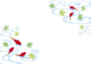 金魚と流水紋と青紅葉の背景のイラスト素材 [FYI04893608]