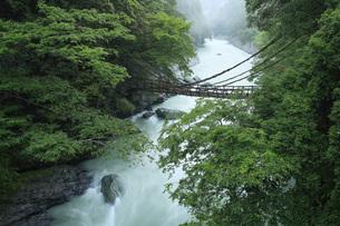 祖谷のかずら橋 徳島県の写真素材 [FYI04893730]