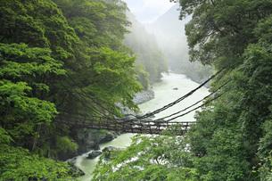 祖谷のかずら橋 徳島県の写真素材 [FYI04893731]