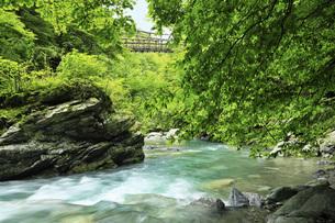 奥祖谷二重かずら橋の男橋と清流 徳島県の写真素材 [FYI04893737]