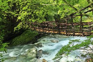 奥祖谷二重かずら橋の女橋と祖谷川の清流 徳島県の写真素材 [FYI04893738]