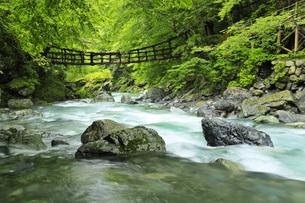 奥祖谷二重かずら橋と祖谷川の清流 徳島県の写真素材 [FYI04893739]