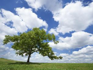 初夏の青空と草原の写真素材 [FYI04893945]