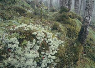 苔が密集した森(北海道・鹿追町)の写真素材 [FYI04894028]