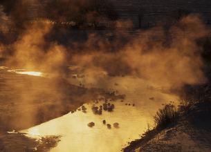 けあらしの湧き立つオオハクチョウのねぐら(北海道・幕別町)の写真素材 [FYI04894050]
