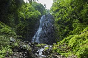 白猪の滝(愛媛県)の写真素材 [FYI04894064]