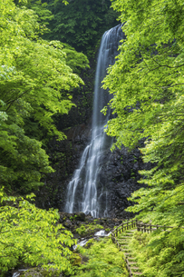 白猪の滝(愛媛県)の写真素材 [FYI04894078]