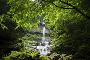 唐岬ノ滝(愛媛県)の写真素材 [FYI04894096]