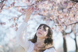 桜の花を楽しむ女性の写真素材 [FYI04894432]