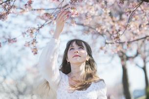 桜の花を楽しむ女性の写真素材 [FYI04894433]