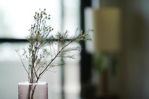 室内に飾られている植物の写真素材 [FYI04894707]