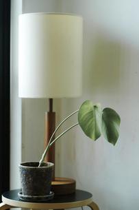 鉢植えとテーブルランプの写真素材 [FYI04894760]
