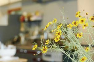 室内に飾られている花の写真素材 [FYI04894761]