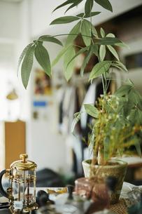 室内に飾られているインテリアと植物の写真素材 [FYI04894930]