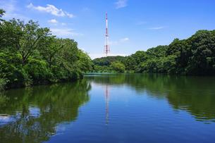 三ッ池公園の池に映えるテレビ神奈川(三ツ池送信所)の鉄塔の写真素材 [FYI04895344]