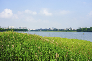 谷津干潟公園(千葉県習志野市)の写真素材 [FYI04895946]
