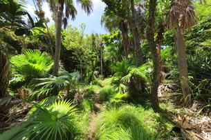 小笠原国立公園 母島の密林に遊歩道の写真素材 [FYI04896201]