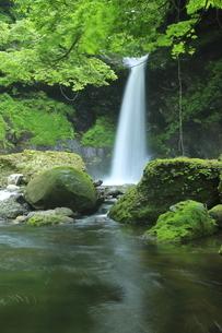 6月 緑の姉妹滝の写真素材 [FYI04896516]