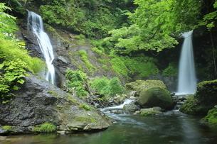 6月 緑の姉妹滝の写真素材 [FYI04896518]