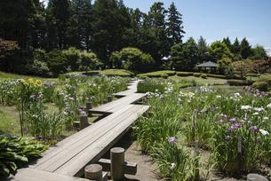 藤田記念庭園 低地部庭園の写真素材 [FYI04896597]