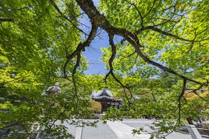 伊豆修善寺の観光名所 青紅葉が迎える修禅寺本堂の写真素材 [FYI04896640]