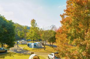 秋のオートキャンプ場の写真素材 [FYI04896897]
