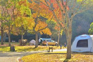 秋のオートキャンプ場の写真素材 [FYI04896898]