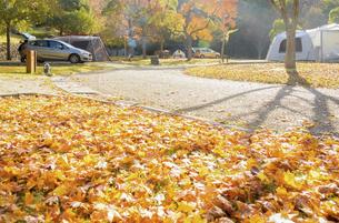 秋のオートキャンプ場の写真素材 [FYI04896899]