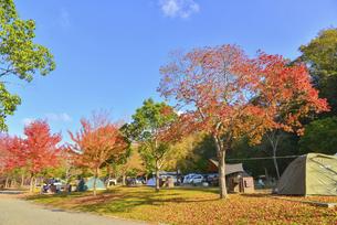 秋のオートキャンプ場の写真素材 [FYI04896900]