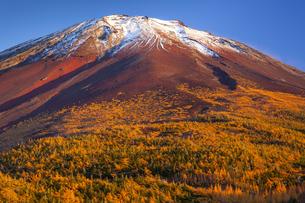 富士山奥庭のカラマツ黄葉 夕焼けの写真素材 [FYI04897345]