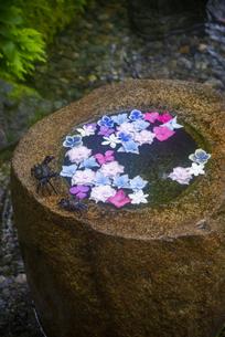 鎌倉の一条恵観山荘の紫陽花の花手水の写真素材 [FYI04897605]