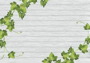 アイビーと白い板壁の背景のイラスト素材 [FYI04897859]