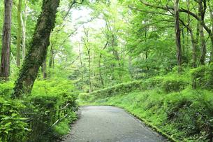 初夏の座間谷戸山公園の写真素材 [FYI04898396]