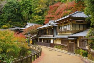 関西の風景 箕面市 紅葉の滝道と町並みの写真素材 [FYI04898516]