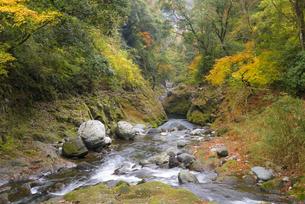 秋の天安河原 岩戸川の写真素材 [FYI04898868]