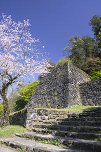 桜の人吉城跡の写真素材 [FYI04898886]