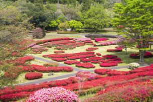 ツツジ咲く椎八重公園の写真素材 [FYI04898892]