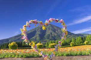 ポピー咲く春の生駒高原の写真素材 [FYI04898910]