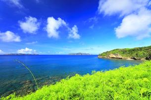 小笠原国立公園 母島の御幸之浜の写真素材 [FYI04899009]