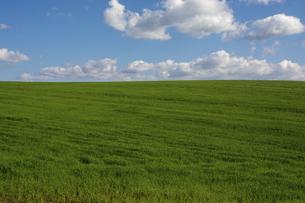 緑の草原と青空に浮かぶ雲の写真素材 [FYI04899343]