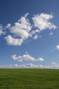 緑の草原と青空に浮かぶ雲の写真素材 [FYI04899344]