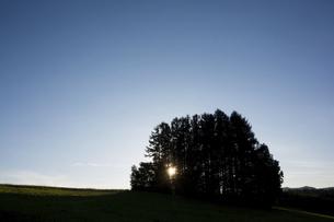 夕暮れの丘の上のマツ林の写真素材 [FYI04899349]